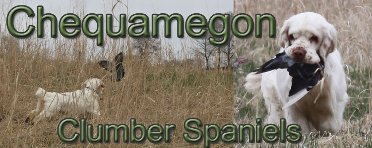 Chequamegon Clumber Spaniels