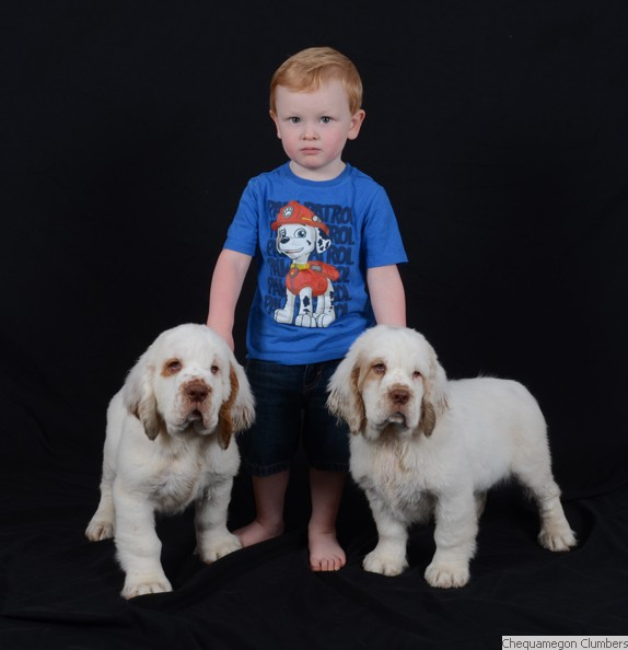 Chequamegon Clumber Spaniel:: Nate & Puppies